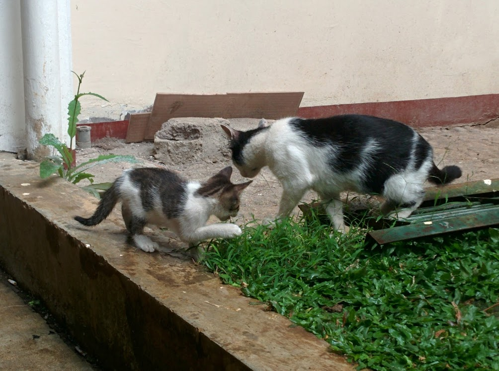 Mother and Her Descendant. I don't know whether the little one is a male or female kitten.